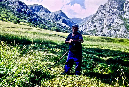 Spain 52aa, hay cutting, Picos de Europe