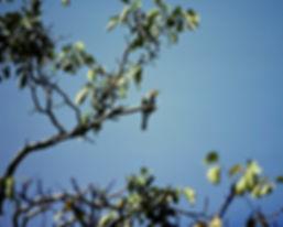 Bee-eater 01a, Spain, 9_81.jpg