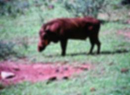 Warthog 01a, Tsavo, Kenya, 5_12_88.jpg
