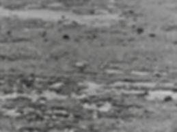 Baird's Sandpiper 11a, Davidstow, 27-9-8
