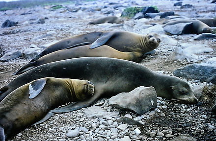 Galapagos Sea Lion 02a, Galapagos, 26_7_