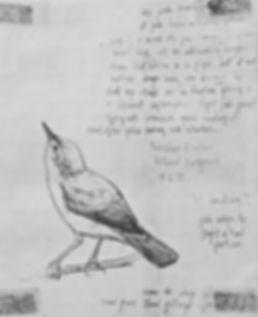 Melodious Warbler, LAT, Portland, 15-8-7