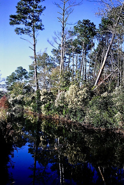 North Carolina 05a, Lake Mattamuskeet, 1