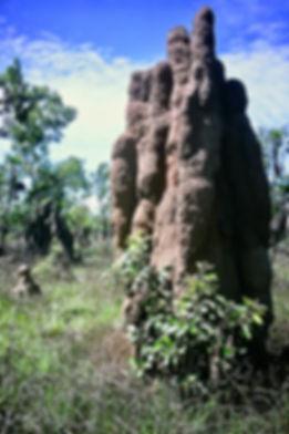 Australian Termite mound 03a, Litchfield
