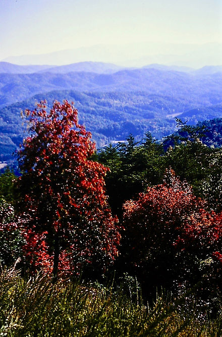 Tennessee 20a, Great Smoky Mts, 10_87.jp