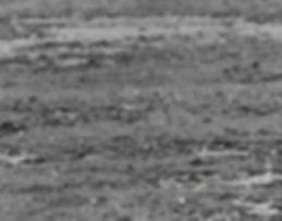 Baird's Sandpiper 17a, Davidstow, 27-9-8