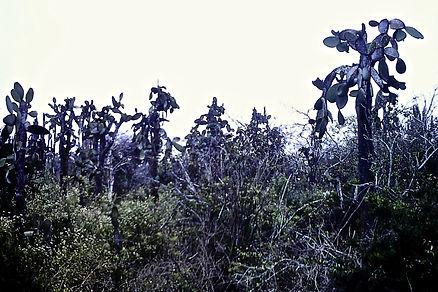 Galapagos 02a, Santa Cruz, 26_7_86.jpg