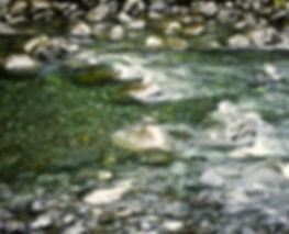 Blue Duck 02a, New Zealand, 23_11_93.jpg