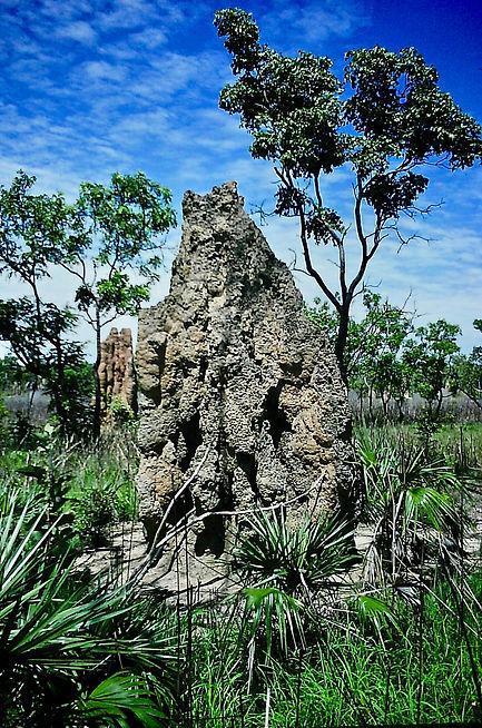 Australian Termite mound 05a, Litchfield