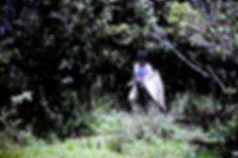 Madagascar 30a, Claire Kremen at Ranomaf