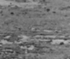 Baird's Sandpiper 14a, Davidstow, 27-9-8