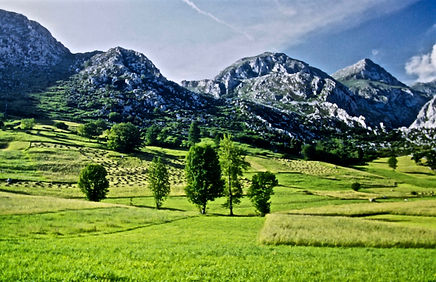 Spain 45aa, hay meadows, Picos de Europe