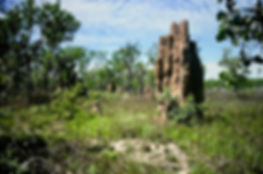 Australian Termite mound 02a, Litchfield
