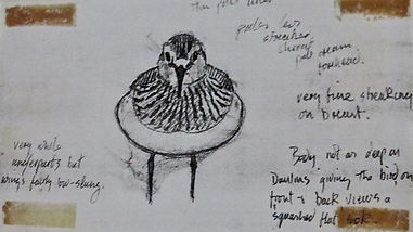 Baird's Sandpiper, LAT 03, Davidstow, 27