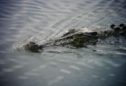 Estuarine Crocodile 05a, Kakadu, 29_11_9