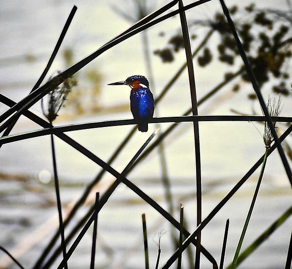 Madagascar Kingfisher 03a, Madagascar, 2