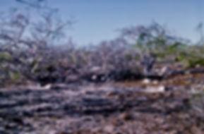 Galapagos 01a, North Seymour, 24_7_86.jp