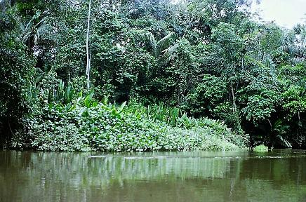 Ecuador 20a, creek off Napo River, 2_8_8