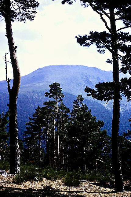 Spain 21a, Sierra de Guadarrama, 9_81.jp