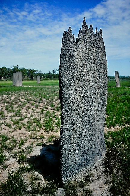 Magnetic Termite mound 05a, Litchfield,