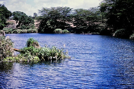 Kenya 01a, Mzima Springs, Tsavo, 12_88.j