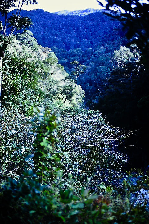 Madagascar 21a, Ranomafana rainforest, 1