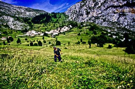 Spain 50aa, hay cutting, Picos de Europe