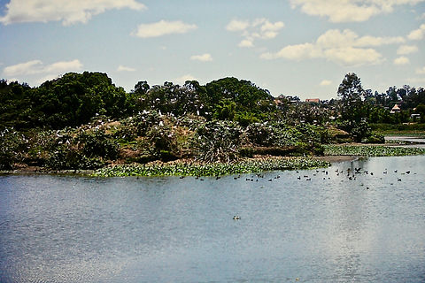 Madagascar 05a, Lac d'Alarobia, 2_11_88.