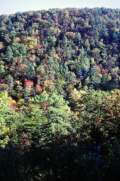 Tennessee 13a, Great Smoky Mts, 10_87.jp