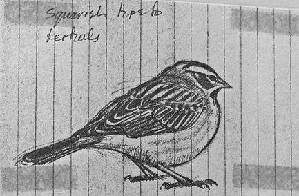 Lark Sparrow LAT01, Landguard Point, 1_7