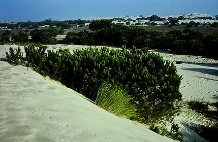 Spain 26aa, Coto Donana dunes, 9_81.jpg