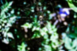 Golden Silk Orb-weaver Spider 02a, Nairo