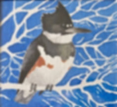 Belted Kingfisher, LAT 02, Camel Valley,