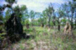 Australian Termite mound 01a, Litchfield