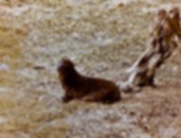 Galapagos Sea Lion 07a, Galapagos, 26_7_