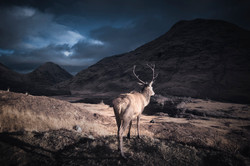 The King of the Highlands