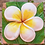 Thumbnail: Flower sculpture on wall Phuket,Thailand