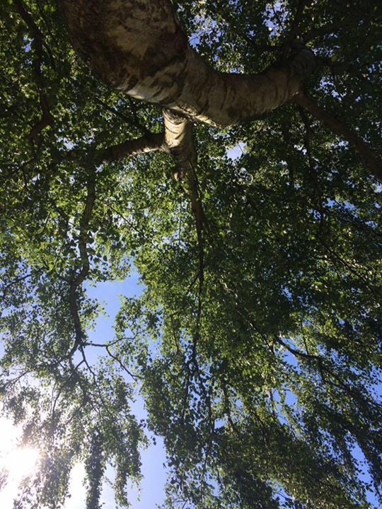 I am laying on the ground and watching the leafs of a Birch tree in the Abbey. The sun warms my legs and I can hear the tree in the wind. It is  a lovely day.