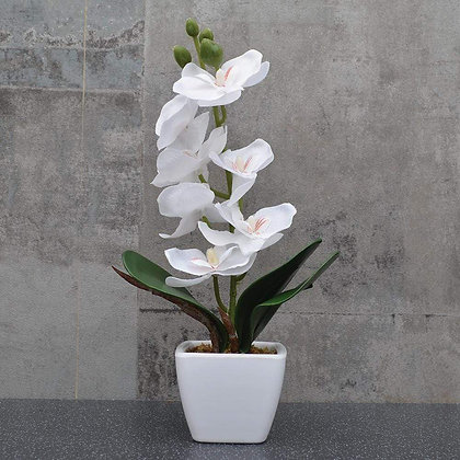 White Orchid in Square Pot