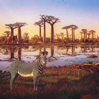 PL_EarthDay_Africa_Social_1x1.mp4
