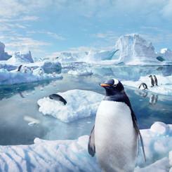 Earth Sounds Antarctica