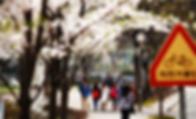 Sejong image 2 100.png