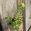 Thumbnail: Succulent planter in lilac