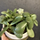 Thumbnail: Succulent planter in olive