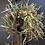 Thumbnail: Teasel wreath