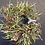 Thumbnail: Little loco dried wreath