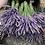 Thumbnail: Lavender bundle