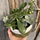 Thumbnail: Succulent planter in olive II