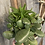 Thumbnail: Succulent planter in sky blue