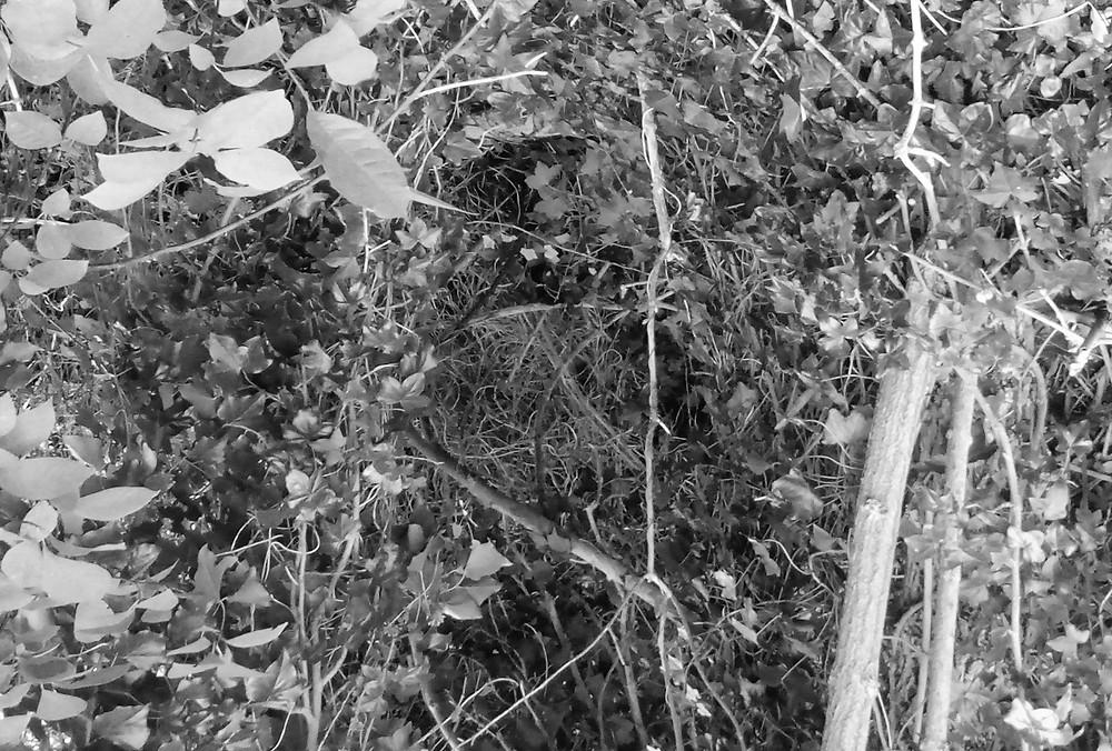 A narrow way through vegetation